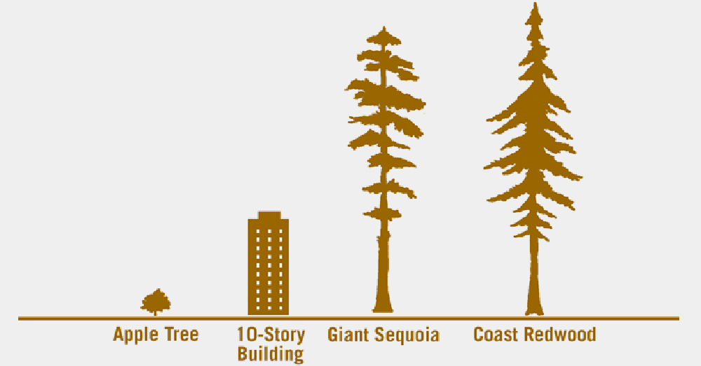 Redwood Comparison