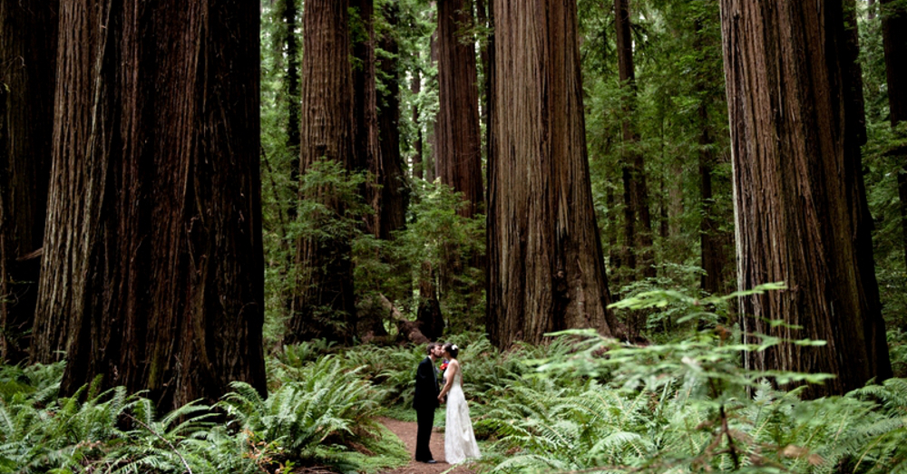 Redwood Kiss (resized)
